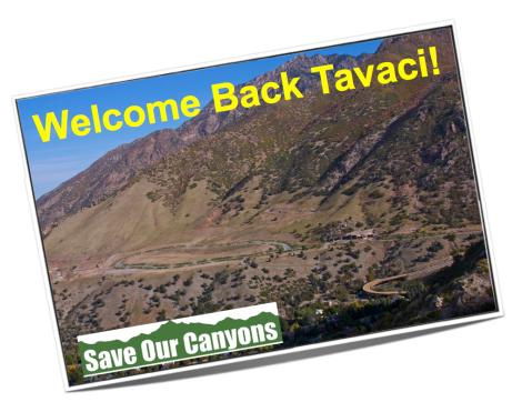 Tavaci is Back