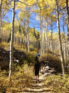 Walking along the golden aspens